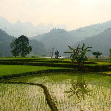 Coverfoto rijstvelden rondom Ha Giang