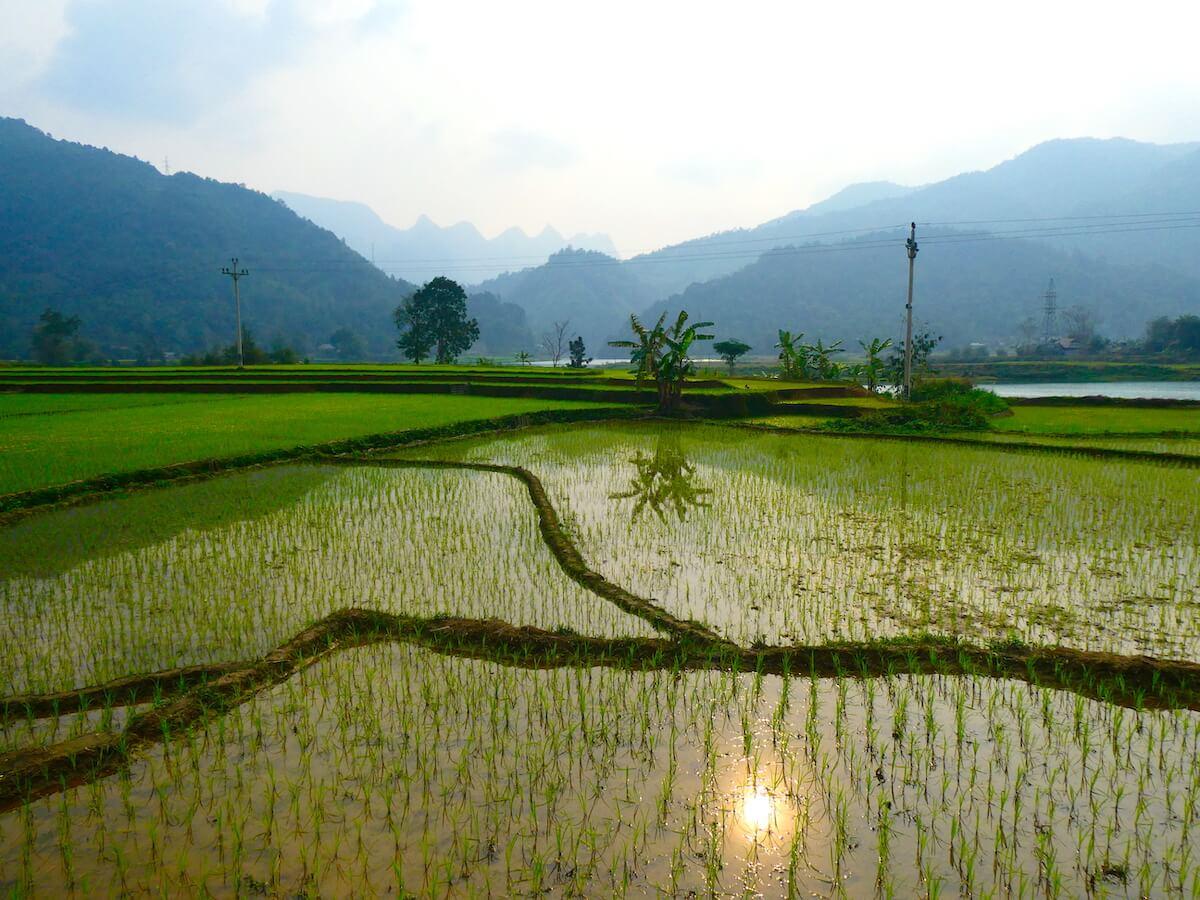Rijstvelden in omgeving Ha Giang