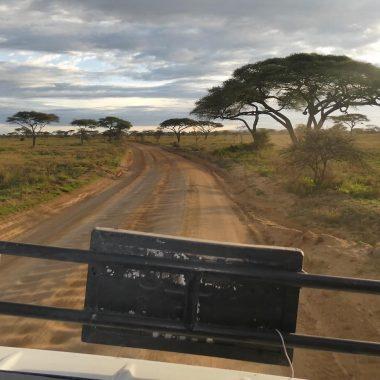 Wegen safari Tanzania