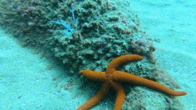 Zeester duiken Madeira